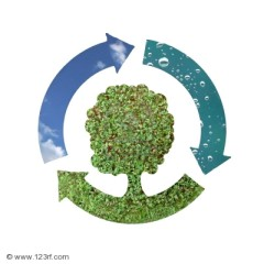 ecologia.jpg